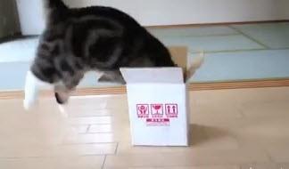 CatInBox