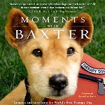 Baxter, The Therapy Dog