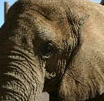 Facilitation: Hearing Silent Elephants